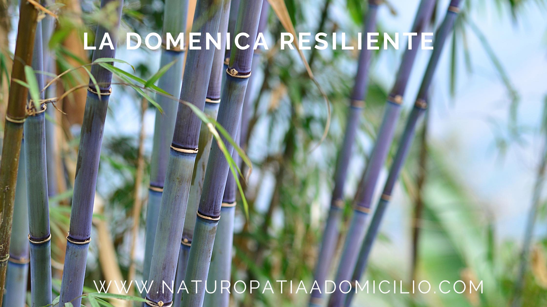 La Domenica Resiliente