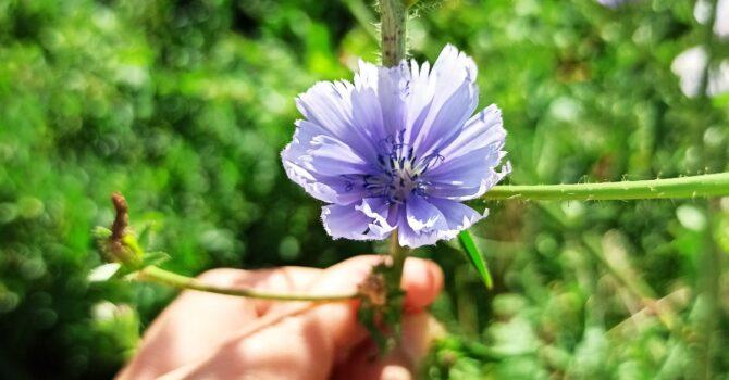 Floriterapia Fiori Di Bach Naturopatia