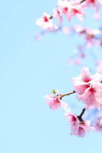 ciclicità, stagioni, rimedi naturali, olistico
