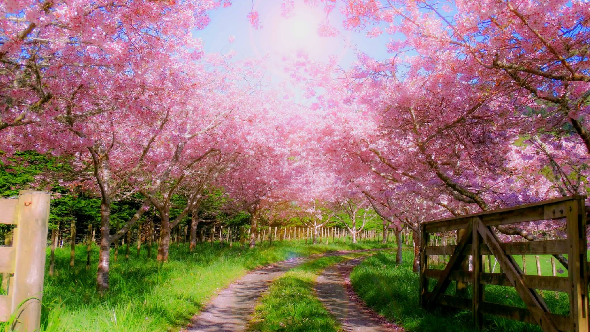 Ostara, Pasqua, Pagani, Equinozio Di Primavera